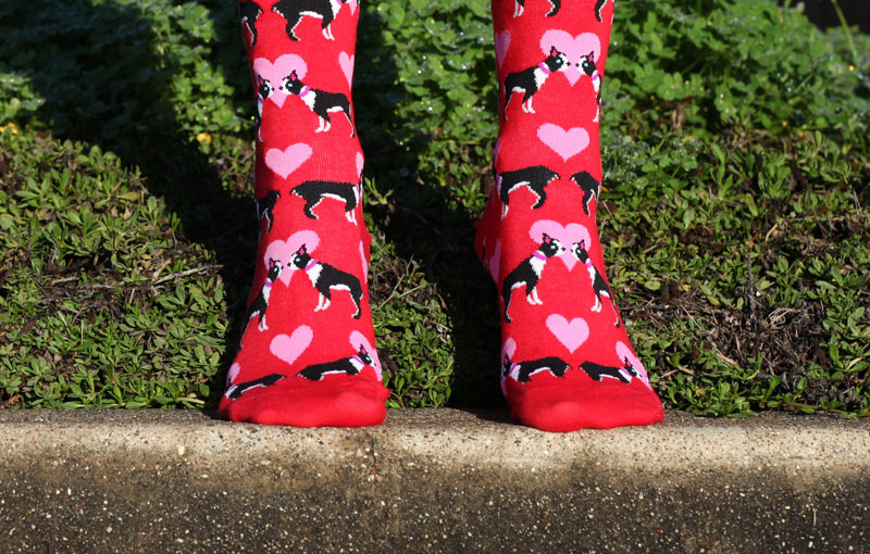 It's a Dog's Life: Top 10 Paw-some Colorful Socks for Women